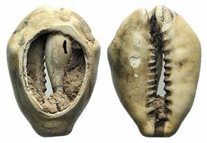 China, Cowry Shell, c. 1st millennium BC ...